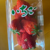 沢山とれてSOS甘い隣のてっちゃん家のいちご! 2パック入り 果物(いちご) 通販