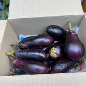 池田様専用 なす2kg 2.0kg 野菜(茄子) 通販