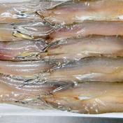 瀬戸内産 真えそ一夜干し 10尾×3P 魚介類(その他魚介の加工品) 通販