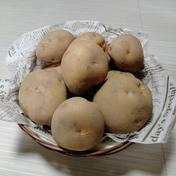 やっちゃん農園のジャガイモ キタアカリ15kg 15キロ 島根県 通販