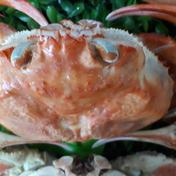 ボイルベニズワイガニわけあり(小サイズ)冷凍 3匹 魚介類(カニ) 通販