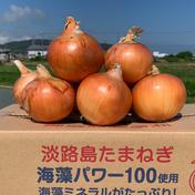 甘さバツグン❗️自然乾燥淡路島産玉ねぎ(5㎏) 5Kg 果物や野菜などのお取り寄せ宅配食材通販産地直送アウル