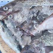 漁師の店 漁師の店のわくわくセット!その日取れたて海鮮BOX! 2㎏