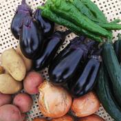 🎃かぼちゃ& 夏野菜セット C🎵🎵 2~4kg 千葉県 通販