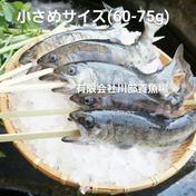 阿蘇から届く湧水やまめ 串つき 10匹 600-800g 魚介類(川魚) 通販