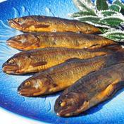 ニジマス甘露煮大サイズ5尾入×3パック 300g(5尾入)×3パック 魚沼 高野養魚場