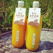 【飲み比べお試しセット】無添加柑橘ジュース 1000ml×2本 飲料(ジュース) 通販