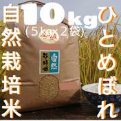 自然栽培 お米の旨味たっぷり氷温熟成 ひとめぼれ 令和2年産 山形県産 庄内産 庄内米 5分つき精米 10kg(5kg×2袋) 10kg(5kg×2袋) 山形県 通販