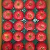 サンふじ20玉5㎏ 5㎏ 果物(りんご) 通販