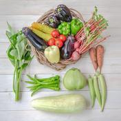 【送料込み!!自然栽培&固定種のみ!!】『まえむき。』の、自然と一緒に育てた旬の野菜セット8~9種類 旬の野菜セット8~9種類 野菜 通販