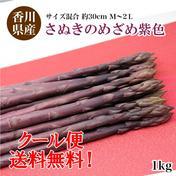 出荷当日の今朝採れ 「1kgさぬきのめざめビオレッタ 30cm M~2L ミックス」紫色アスパラ 1kg 野菜(アスパラガス) 通販