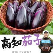 感動✨高知なす なすび記念日 なす3kg袋入り 『30本程度』 野菜(茄子) 通販