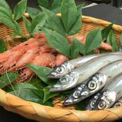コスパが高い深海魚(トロえび中小×メギス) トロえび中小1パック1kg(80-100尾前後)/メギス1パック1kg(20-25尾前後) 果物や野菜などのお取り寄せ宅配食材通販産地直送アウル