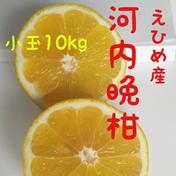 石川ファームの愛南ゴールド【訳あり】 10kg 果物(柑橘類) 通販