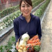 採りたて野菜!お試し5品セット! 5品 静岡県 通販