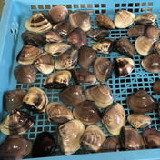 椎名丸漁業 九十九里地はまぐり 4キロ入 千葉県ブランド水産物認定品 4キロ入