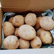 [減農薬・埼玉県加須市産]じゃがいも(男爵)1.8kg 約1.8kg 果物や野菜などのお取り寄せ宅配食材通販産地直送アウル