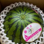スウィートキッズ小玉スイカ約2kg。 約2kg 果物 通販