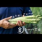 【限定2名様】おためしアスパラ🌙 1.0kg 果物や野菜などのお取り寄せ宅配食材通販産地直送アウル