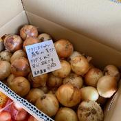 サラたまちゃん農家のサラダ玉ねぎ 5kg 野菜(玉ねぎ) 通販