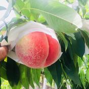 【夏ギフト 遠地対象外・常温配送】林農園の桃2kg(6個〜9個入り) 約2kg 果物や野菜などのお取り寄せ宅配食材通販産地直送アウル