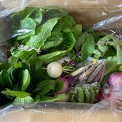 京丹波の野菜セット 1.5キロ前後 食材ジャンル: 野菜 > セット・詰め合わせ 通販