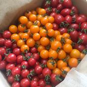 コク旨ミニトマト3種ミックス2kg 2kg 和歌山県 通販