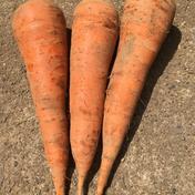 まっすぐな人参5キロ以上 1箱5キロ以上 果物や野菜などのお取り寄せ宅配食材通販産地直送アウル