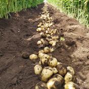 浅野農園の無農薬ジャガ&玉ねぎセット 8kg 果物や野菜などのお取り寄せ宅配食材通販産地直送アウル