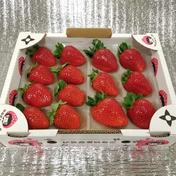 はなだふぁーむ 『プレミアムモカベリー 』 苺 イチゴ ※時間指定は可能です。 一箱 苺のみ約540g【約270g×2パック】