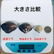父の日 中はまぐり1キロ(20〜25個)〜 1キロ 魚介類(蛤) 通販