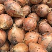 島恵自然農園 農薬・化学肥料不使用 玉ねぎ 3㎏