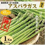 朝採りアスパラガス 2Lサイズ 1kg(約20本) 新潟県産  1kg 野菜(アスパラガス) 通販