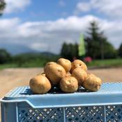 北海道産新じゃが 品種とうや 10kg LMサイズ 10kg 果物や野菜などのお取り寄せ宅配食材通販産地直送アウル