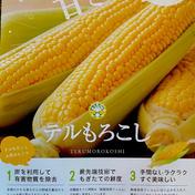 甘々娘 4〜6本入り(3L〜L)『テルもろこし』 1.75kg前後 静岡県 通販