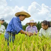 滝本米 プレミアム 玄米 5kg×2袋 農薬不使用 玄米 化学肥料不使用 特別栽培米 プレミアム 5kg×2袋 福井県 通販