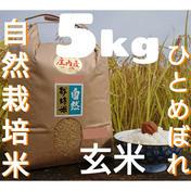 自然栽培 氷温熟成 ひとめぼれ 令和2年産 山形県産 庄内米 玄米 5kg 5kg 山形県 通販