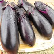 焼きナスにオススメ! 口から溢れる2Lサイズナス⭐ 約2kg(11-13本) 果物や野菜などのお取り寄せ宅配食材通販産地直送アウル