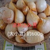 【特価❗規格外や汚れ有り】 ジャンボにんにく 約600g(大小混) 愛知県 通販