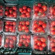マルキュウフルーツ ミニトマト5パック
