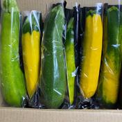 ズッキーニ 2kg 野菜 通販