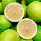 supermoon様専用 2キロ 果物(レモン) 通販
