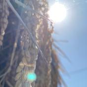 郷山のお米 あきたこまち 玄米 4.5kg 4.5kg 秋田県 通販