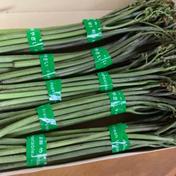 我が裏山で栽培してる天然ワラビ(1kg) 1kg 果物や野菜などのお取り寄せ宅配食材通販産地直送アウル