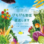のぐちファーム 野口様専用ページ☆のぐちファーム安曇野産野菜セット
