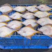 おチビちゃんカレイ。 魚介類(セット・詰め合わせ) 通販