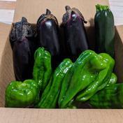 ジコモfarm 【5名限定】夏野菜3種カレーセット!60サイズ 2キロ
