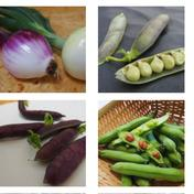 楽しい野菜の宝箱「やさいのこばこ」(Sサイズ) 旬の野菜5-6品ほど 石川県 通販