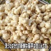 イヌリン野菜の王様 洗浄した菊芋 (生菊芋 1Kg) 1kg たいら農園