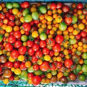 完熟!!のぐちファーム安曇野産カラフルミニトマト1Kg 1Kg のぐちファーム